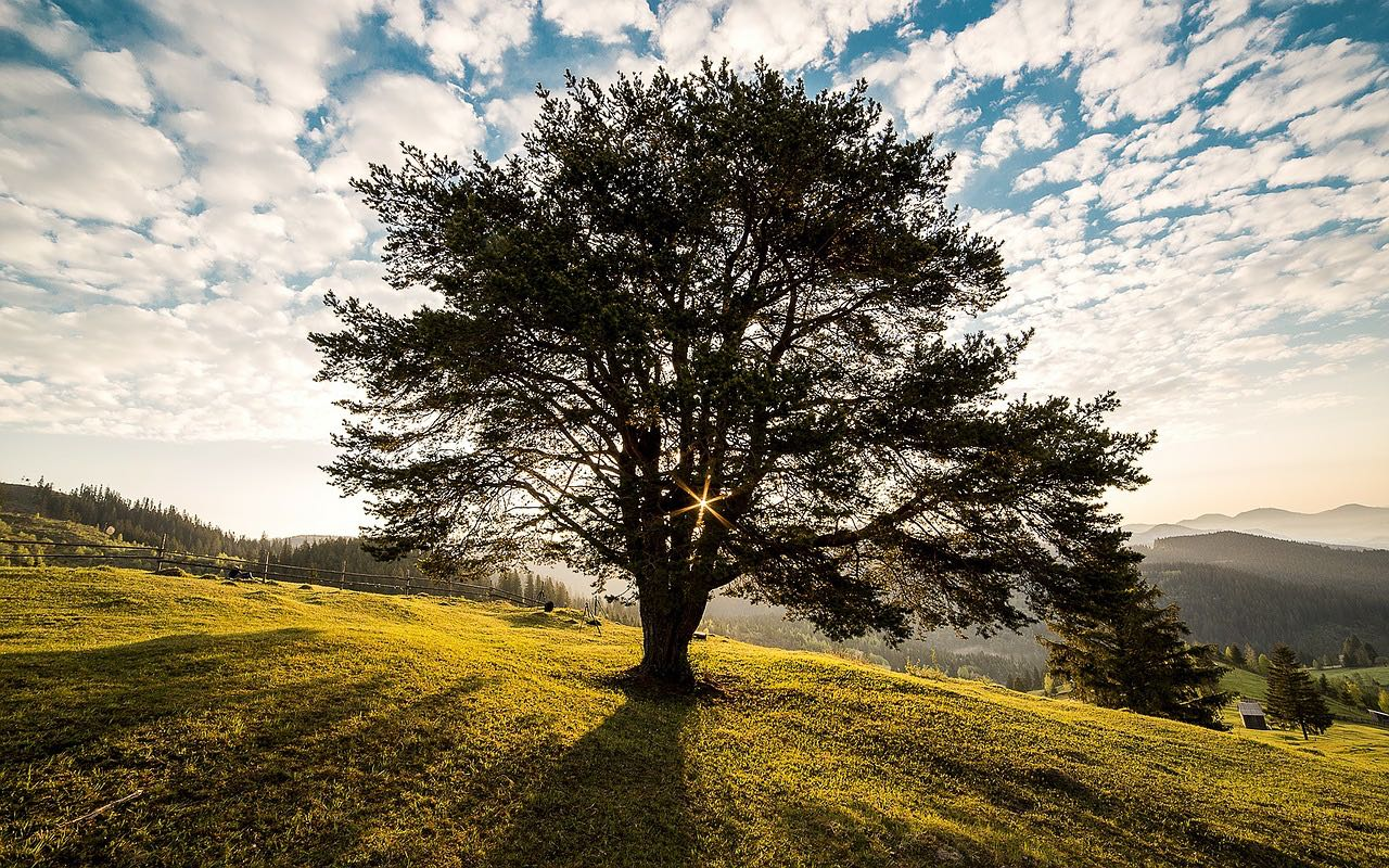 picture of tree in Summer
